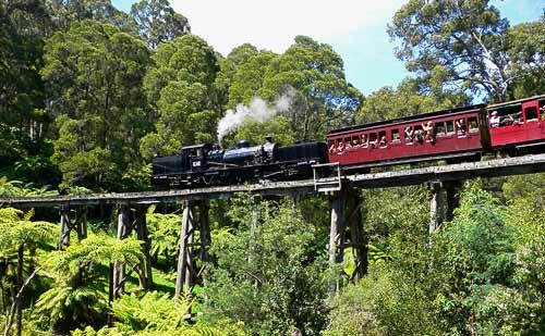 Garratt G 42 von Puffing Billy auf der hölzernen Trestle Bridge