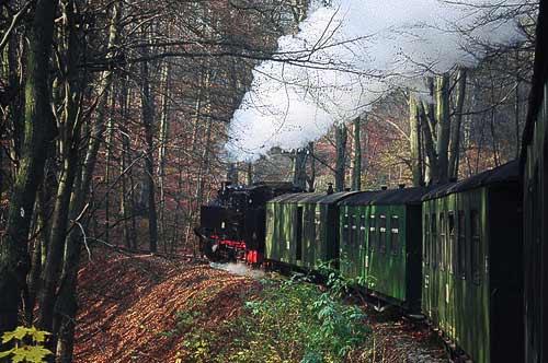 Der Rasende Roland durchfährt das Naturschutzgebiet Granitz
